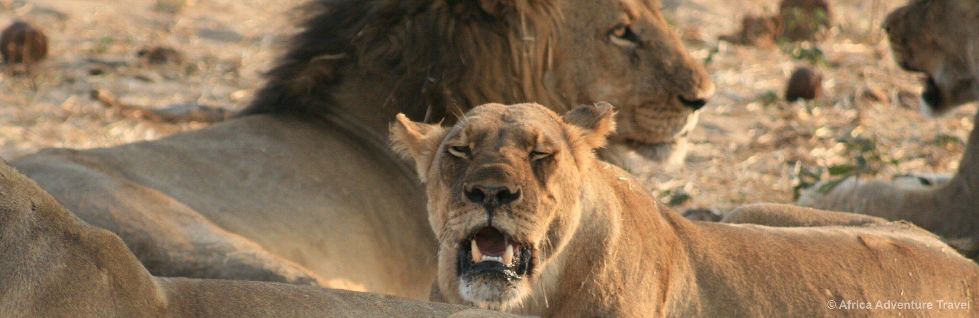 hwange-lions.jpg